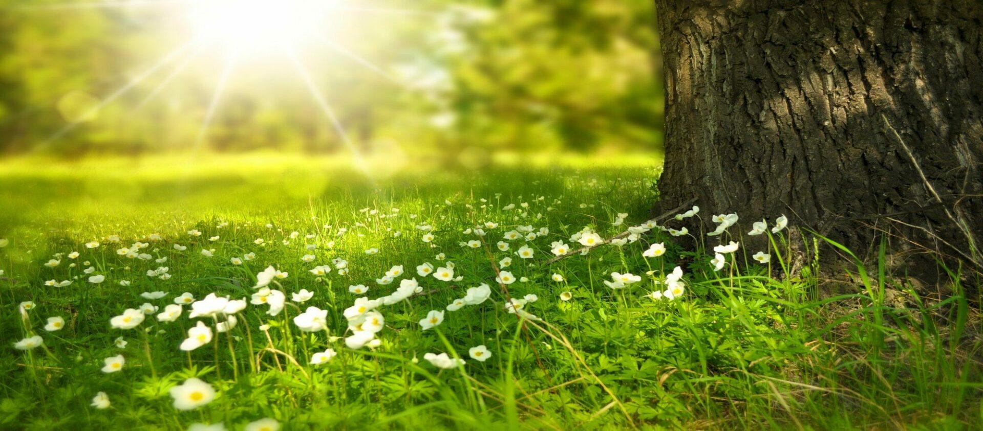 Espace bien-être du Florival